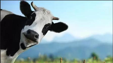 Як одержати дотацію на молодняк тим, хто утримує велику рогату худобу у власному господарстві?