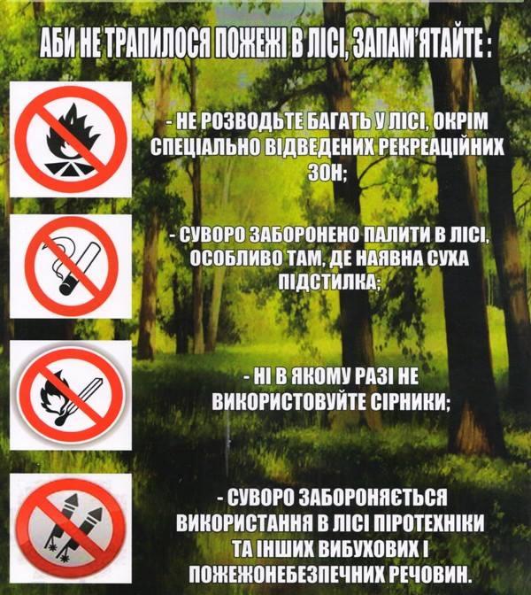 безпека в лісі