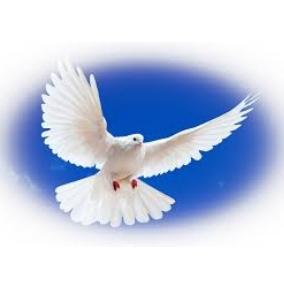 Флешмоб присвяченний Міжнародному Дню миру у Бутинській ЗОШ