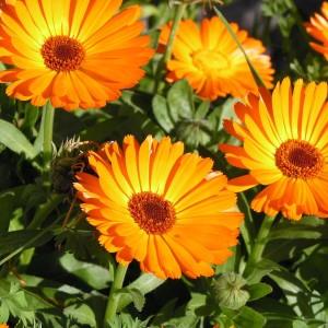 6900489-summer-flower-screensavers