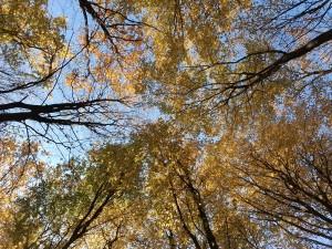 садочок осінь 18 (21)