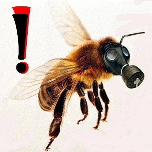 Безпека бджіл під час використання пестицидів у сільському господарстві /інфографіка/