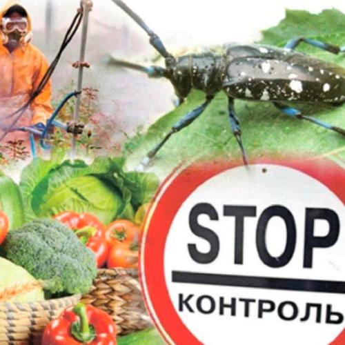 Увага! Карантинні організми Тернопільської області /інфографіка/