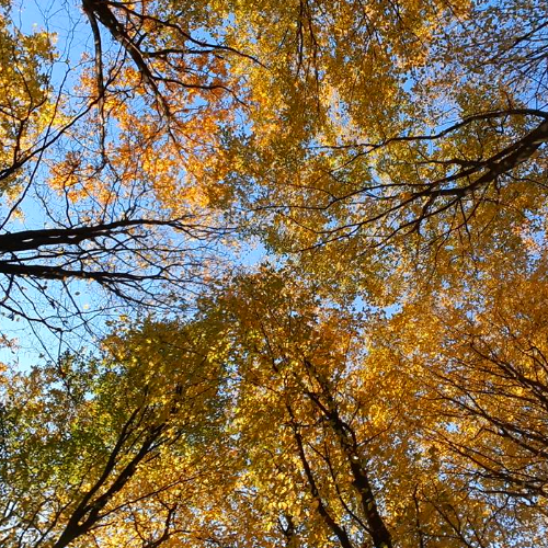 """Відвідали осінній ліс малята ЗДО """"Дзвіночок"""""""