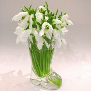 квіти 448