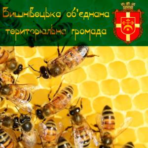 бджоли 22