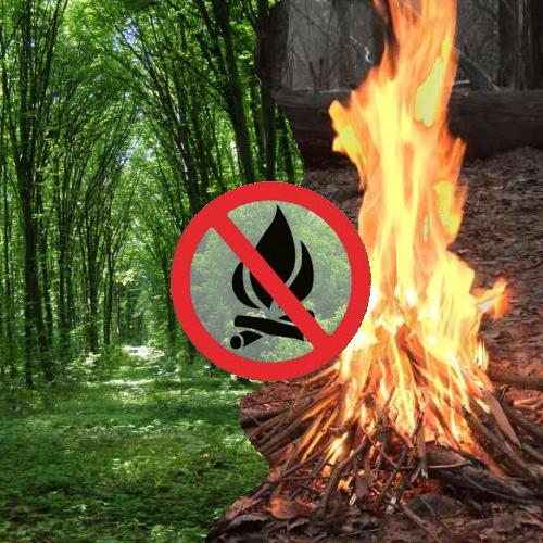 Про заборону відвідування населенням лісів та в'їзду до них автотранспорту протягом 2020 року