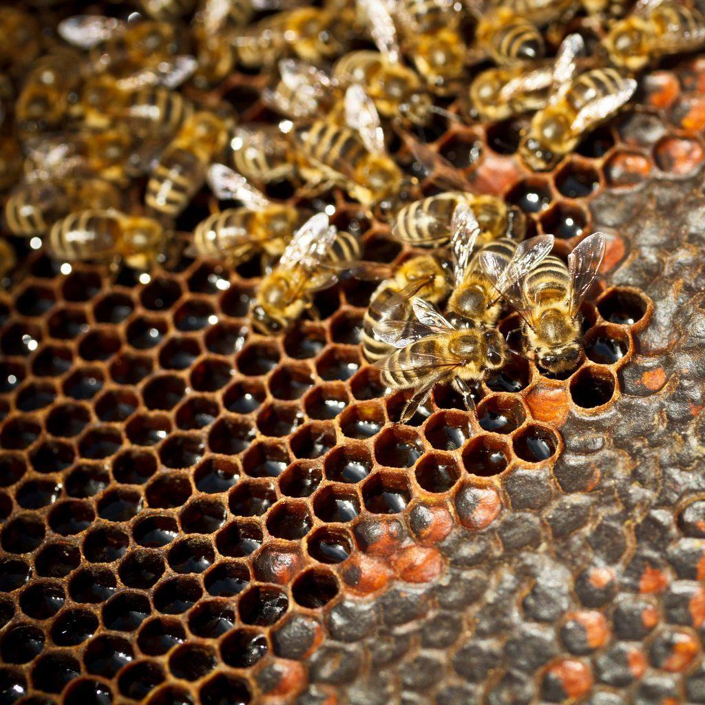 Державна підтримка бджільництва в 2020 році